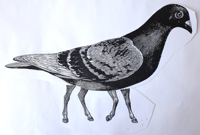Collage made of bird body and horse legs