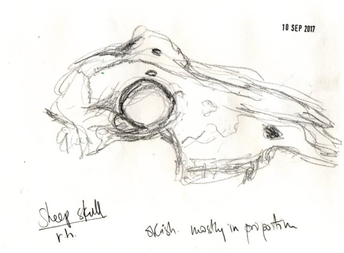 Sketch of sheep's skull from side with notes