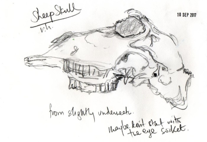 Sketch of sheep's skull from below with notes