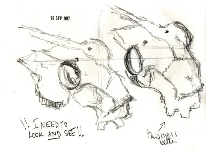 Double sketch of sheep's skull from top with notes